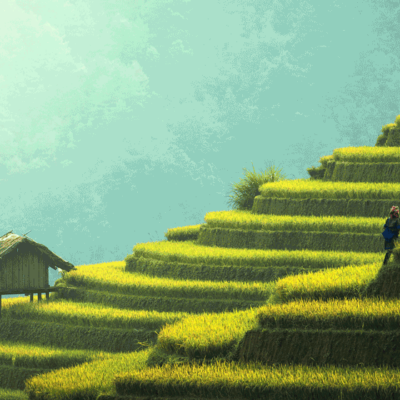 tea-world